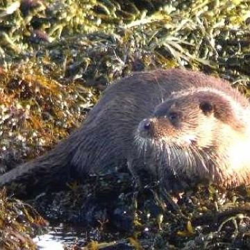 Otter and Water Vole Surveys
